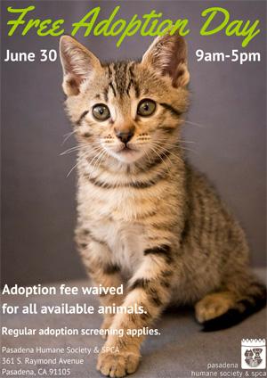Free_Adoption_Day_Kitten-Pasadena-Humane-Society